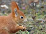 Squirrel 226