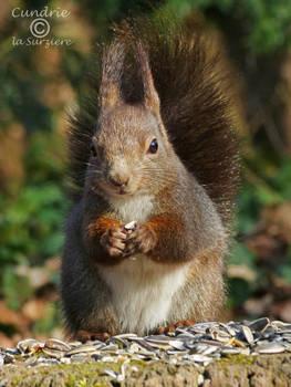 Squirrel 274