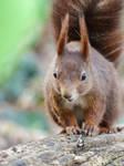 Squirrel 250