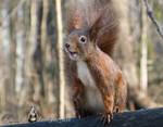 Squirrel 255