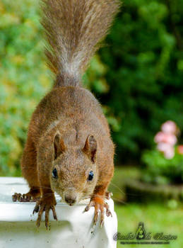 Squirrel 270