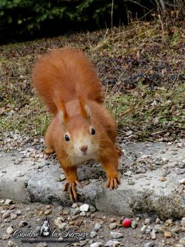 Squirrel 271