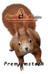 Squirrel - Premium Stock
