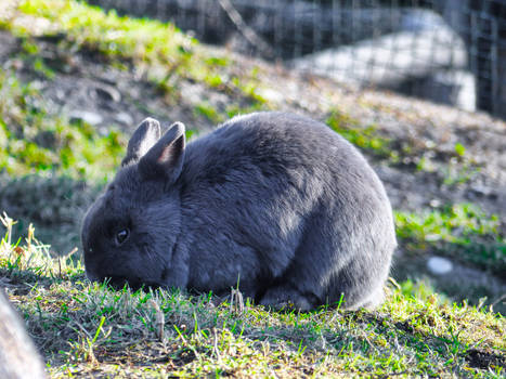 Easter Bunny by Cundrie-la-Surziere