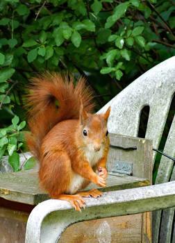 Squirrel 273