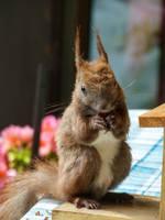 Squirrel 275