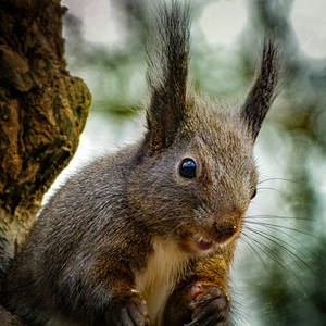 Squirrel 276