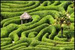 Into the Green Maze by MyonArt