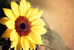 Sunflower by MyonArt