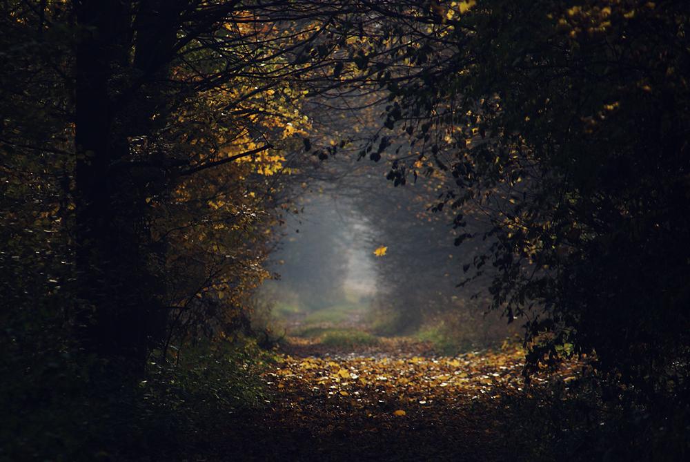 Misty Days by Serjia