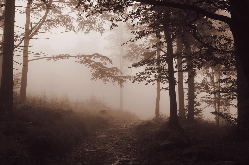 The Ensemble of Silence by Serjia