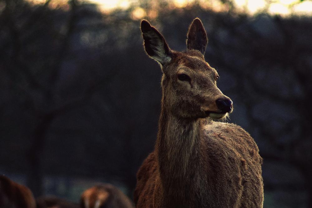 Wild Elegance by Serjia