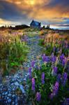 Fairyland by Michaelthien