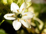 Small Flower in full view by shades-of-art