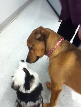 My dog with a deaf dog