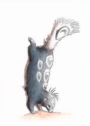 Blue Spotted Skunk