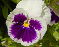 Butterfly Flower by CRG-Free