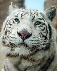 White Tiger by CRG-Free