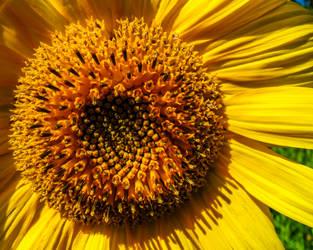 Golden Days by CRG-Free