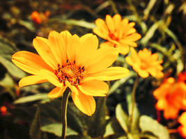 Golden Dreams of Springtime by CRG-Free