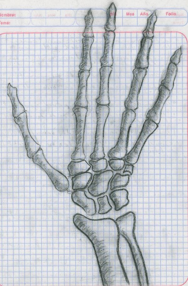mano huesos - hand bones by AetosAchlys on DeviantArt