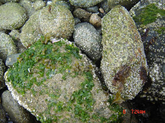 Mossy Rocks by lily101220
