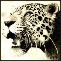 Leopard Square