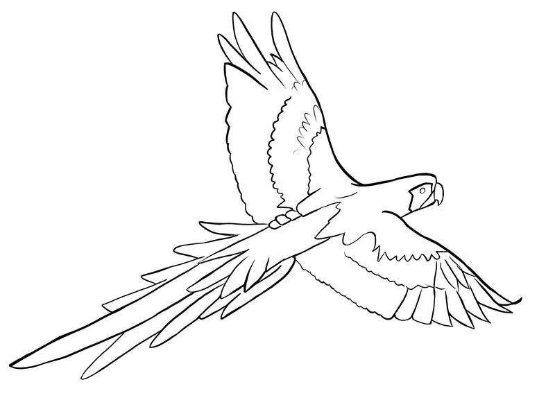 Simple Bird Line Art : Parrot outline by hamdhan on deviantart