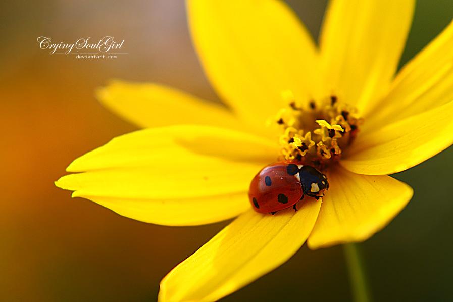 Ladybug. by CryingSoulGirl