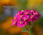 Colorful life. by CryingSoulGirl