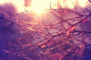 Sunshine. by CryingSoulGirl
