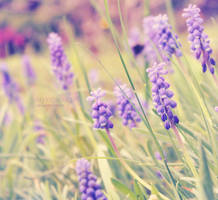 Soft Purple. by CryingSoulGirl