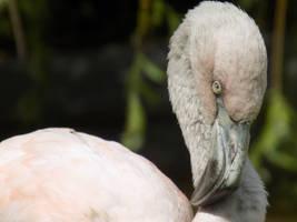Baby Flamingo  by Skrillexia-TF