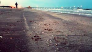Pawprints on the Beach