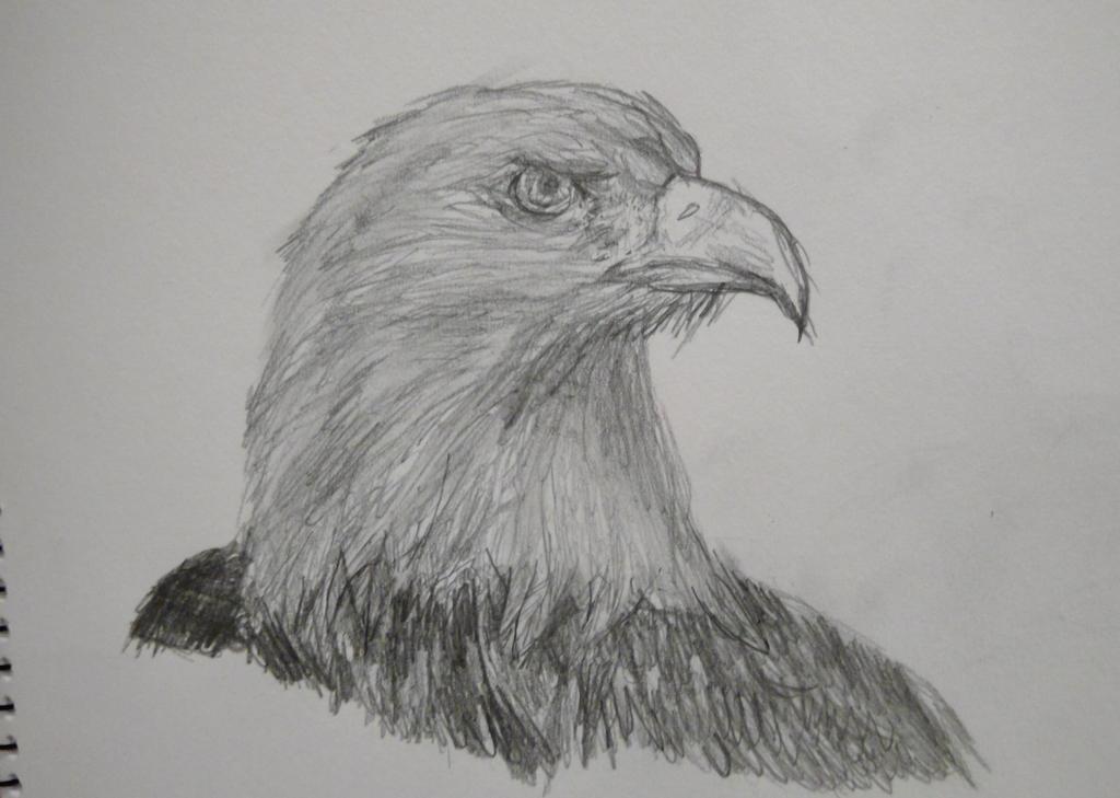 [Image: bald_eagle_by_paperdoors-daffcae.jpg]