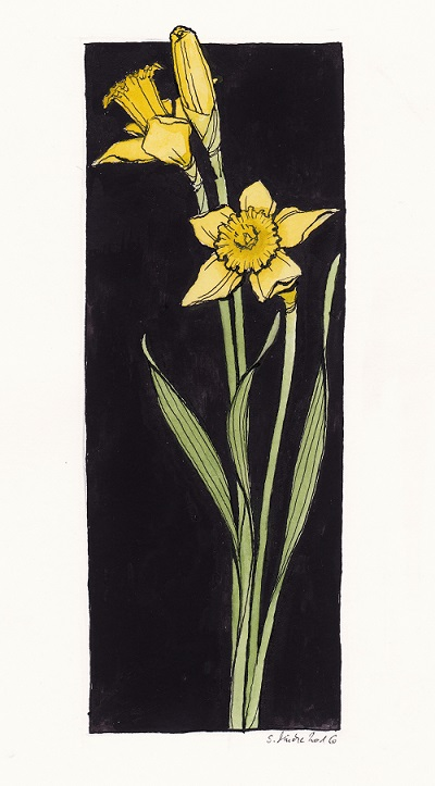 Narcissus pseudonarcissus by cidaq