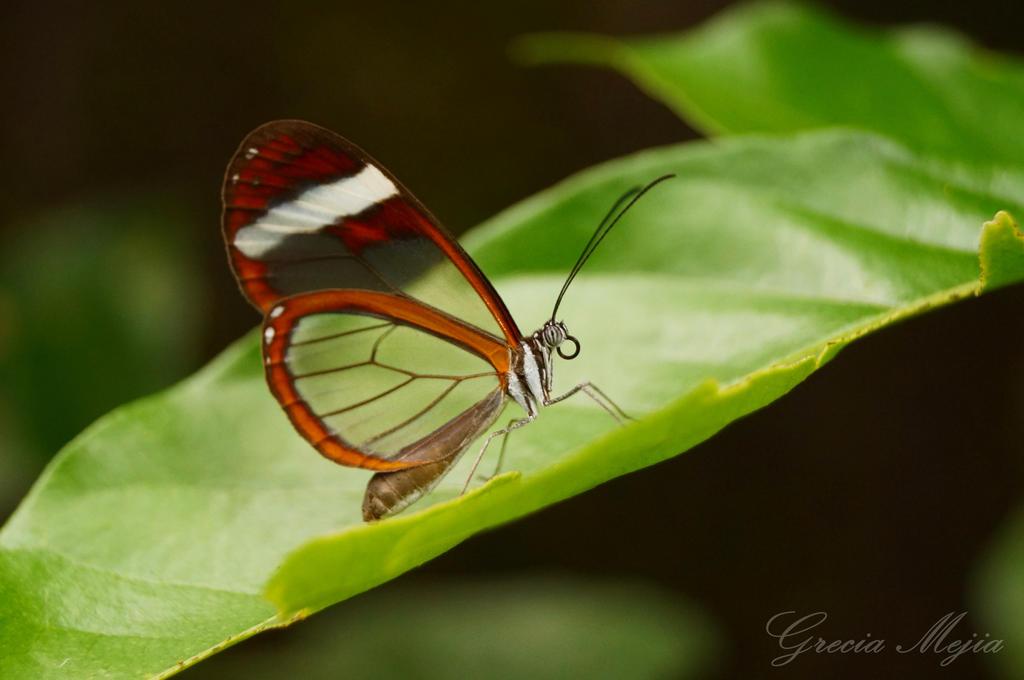Mariposa de Cristal by GreciaWalker
