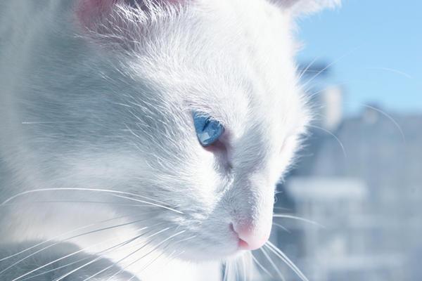 eichhornschweif warrior cats