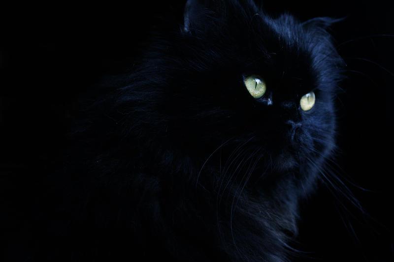 Black Cat by Sventine