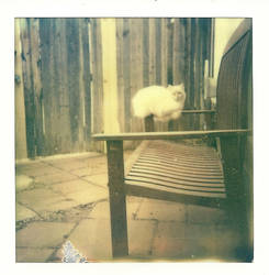 Stray Kitten by InstantPhotographer