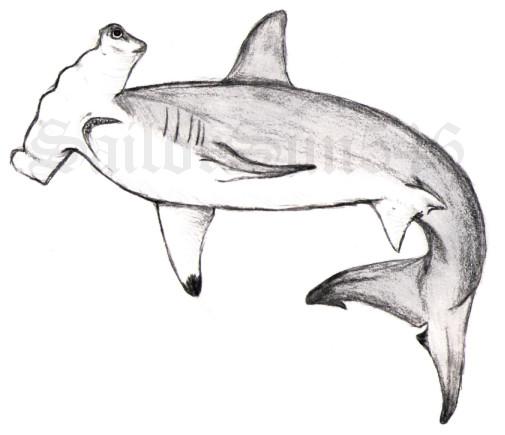 Realistic Hammerhead Shark Drawing   www.imgkid.com - The ...