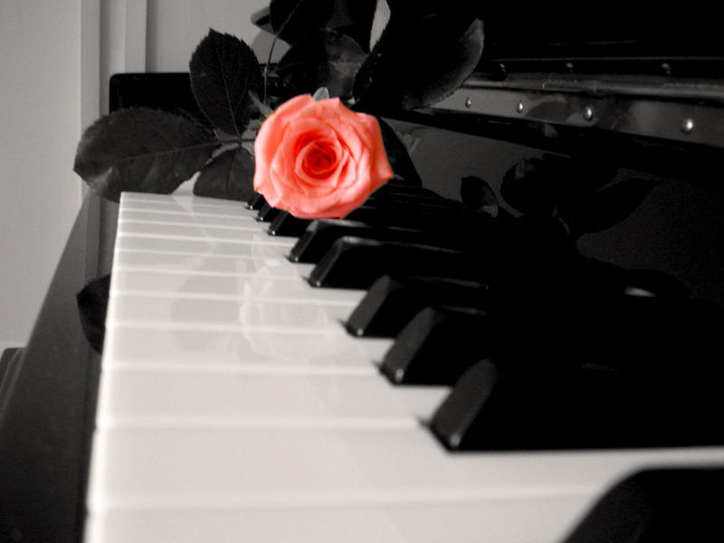 piano and rose? by konviict