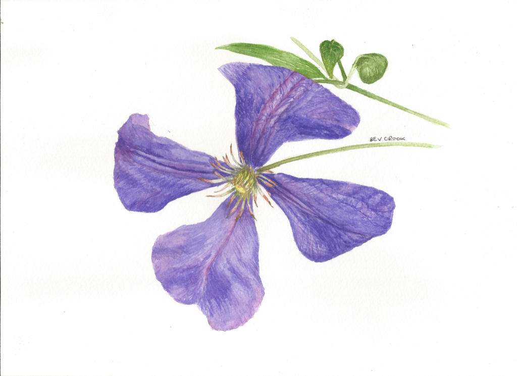 Purple clematis by alter-ipse-amicus