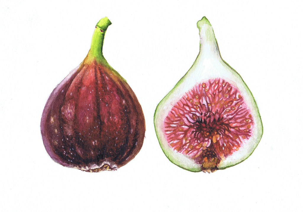 Fig by alter-ipse-amicus