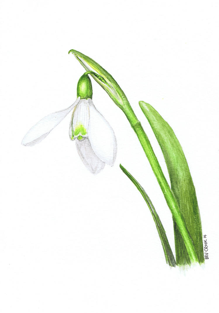 Watercolour snowdrop by alter-ipse-amicus
