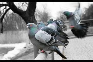 Birds on a line by D-BH