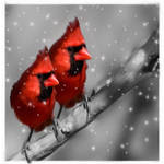 Winter Cardinals by SalonOfArt
