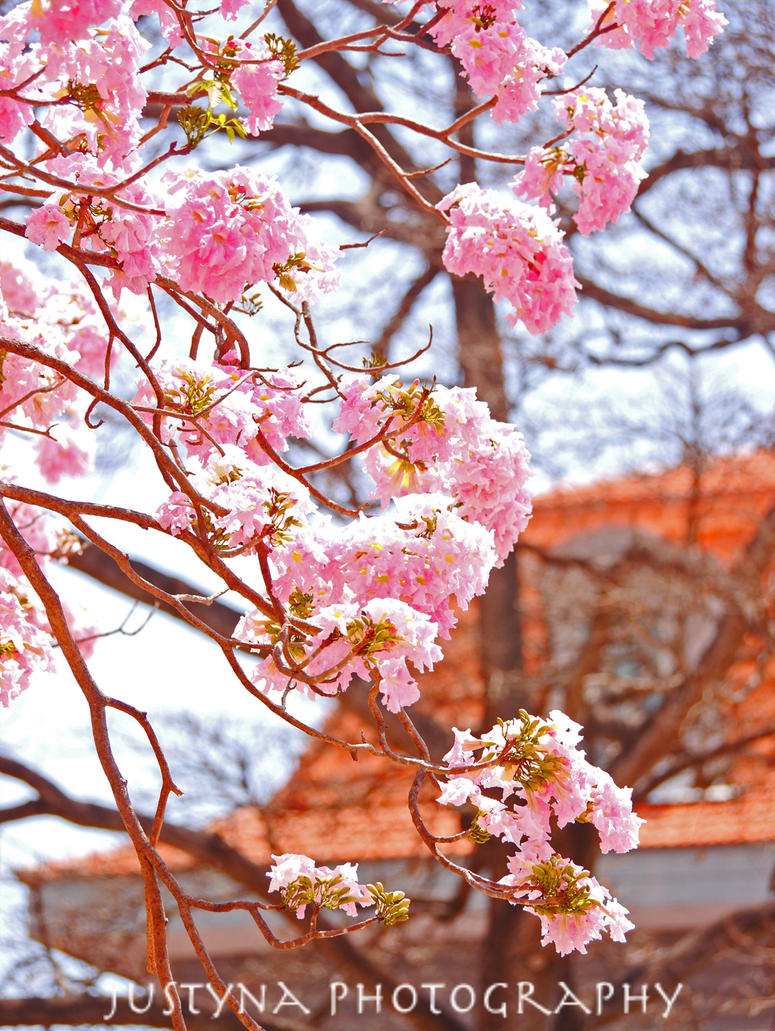 pink __ by burcyna