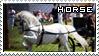 White horse by Mister-MX