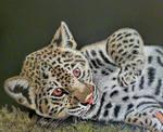 Jaguar Cub by graphiteimage